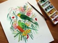 Superb Parrots